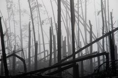 Broken tree during storm gales. A mist of morning mist over a br. Oken forest after a huge wind. Broken forest royalty free stock image