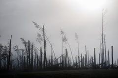 Broken tree during storm gales. A mist of morning mist over a br. Oken forest after a huge wind. Broken forest stock image