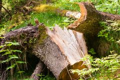 Broken Tree after Storm. Or Hurricane Royalty Free Stock Images