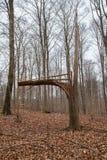 Broken Tree after Storm Hurricane or Lightning Stock Image