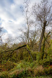 Broken tree after a storm. Royalty Free Stock Photo