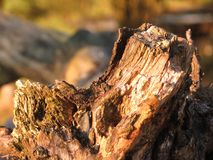 Broken tree with sunlight. Broken tree with beautiful diffused solar radiation Royalty Free Stock Images