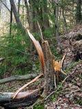 Broken tree trunk Stock Image