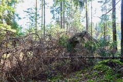 Broken tree trunk on the ground. Fallen tree in forest. In a summer, spring or autumn day stock image