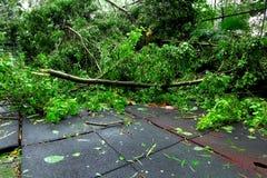 Broken tree after typhoon Stock Photo