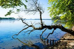 Broken tree by the water Stock Photography