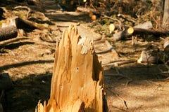 Broken tree wind disaster Stock Photos