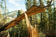 Broken tree wind disaster Stock Images