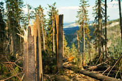 Broken tree wind disaster Royalty Free Stock Images