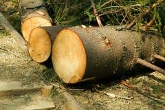 Broken tree wind disaster Stock Photography