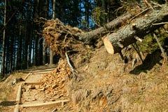 Broken tree wind disaster Stock Image