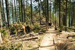 Broken tree wind disaster Royalty Free Stock Image