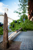 Broken tree after a wind storm. Stock Photography