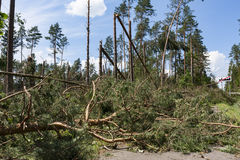 Broken trees blocking the road after the hurricane winds. Destroyed in a roadside forest Stock Images