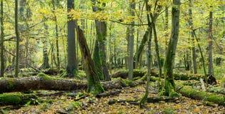 Broken trees almost decomposed Stock Photos