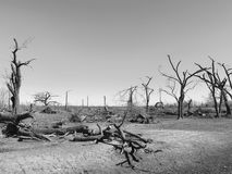 Broken Trees. The destruction from a tornado Royalty Free Stock Photos