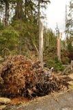 Broken trees stock image