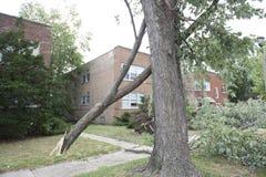 Broken Trees Stock Photo