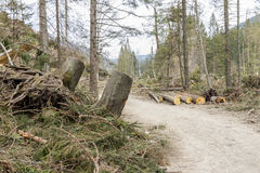 Forest after disaster - Poland. Royalty Free Stock Photography