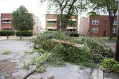 Broken trees Stock Images