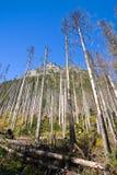 Broken trees Royalty Free Stock Photography