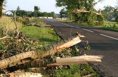 broken trees upp Royaltyfri Fotografi