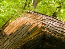broken treestam Royaltyfri Bild
