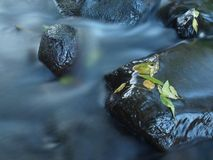 Broken twig on wet stone below increased water level. Royalty Free Stock Images