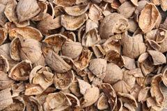 Broken walnut shells. Stock Photography