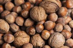 Hazelnuts and walnuts Royalty Free Stock Photo