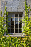 Broken window with vines Stock Images