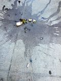 Broken wine bottle and lipstick on concrete pavement in the city. The morning after partying Stock Images