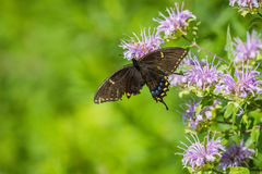 Broken wing can`t stop me royalty free stock photography