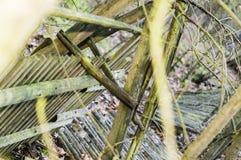 Fallen wooden fence Stock Photo