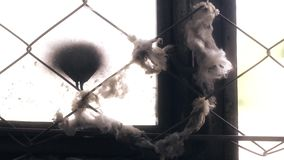 Broken wooden window in an old abandoned building, mesh netting, with cotton wool stuck in it. Close-up stock video