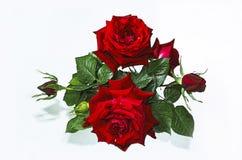 Brokig bukett av röda rosor med knoppar Arkivfoto