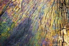 Brokig textur av ett trä Arkivbild