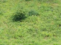 Brokigt gräs Royaltyfria Bilder