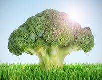 brokkoli草甸结构树 免版税库存照片