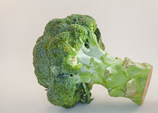Brokkoli auf weißem Hintergrund Lizenzfreie Stockfotografie