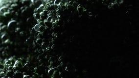 Brokkoli in der Rotation stock video footage