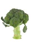 Brokkoli Floret Lizenzfreies Stockfoto