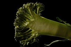 Brokkoli Florets Lizenzfreies Stockfoto