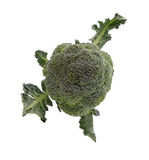 Brokkoli mit Blatt auf Weiß Lizenzfreie Stockfotografie