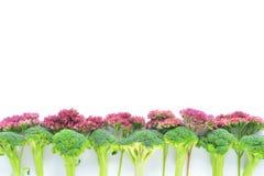 Brokkoli und Blumen-Grenze Lizenzfreie Stockbilder