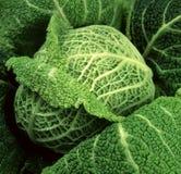 Brokoli крупного плана fabrik свежей капусты элегантное Стоковые Изображения RF