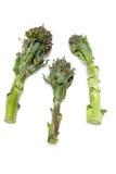 brokułów łodygi Obraz Stock