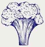 brokuły, świeże ilustracji