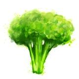 brokuły białe ilustracja wektor