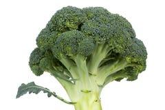 Brokuły odizolowywający na białym tle Zdjęcia Stock